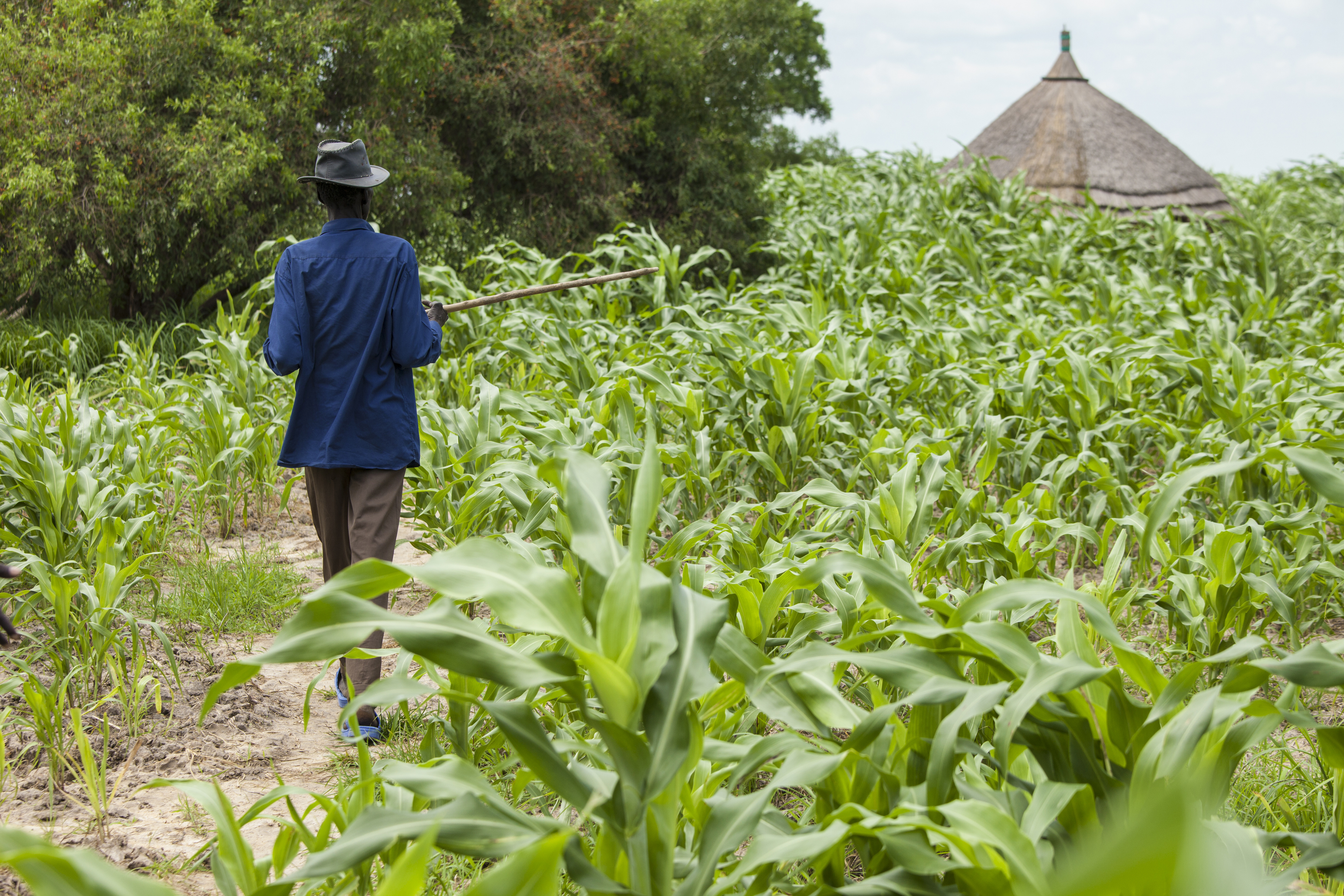CREATION OF A MAJOR AGRO-PARK IN KARA, TO DRIVE THE DEVELOPMENT OF TOGOLESE AGRO-INSTRUSTRY